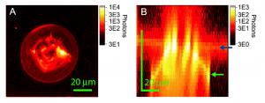 3D Confocal Photoluminescence Lifetime imaging