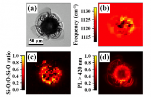 Optical imaging of laser-induced damage using wide-field imaging